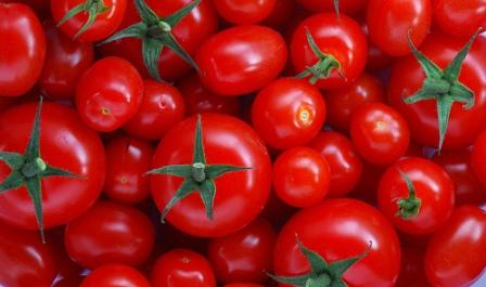 طماطم سوس تحرج الإسبان