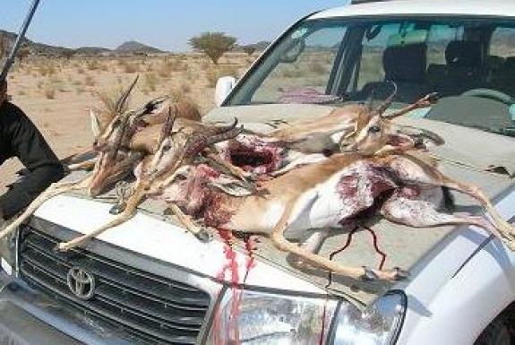 بعد فرار قناص بالاصفاد الدرك  يقتفي أثر عصابة صيد الغزلان بتزنيت