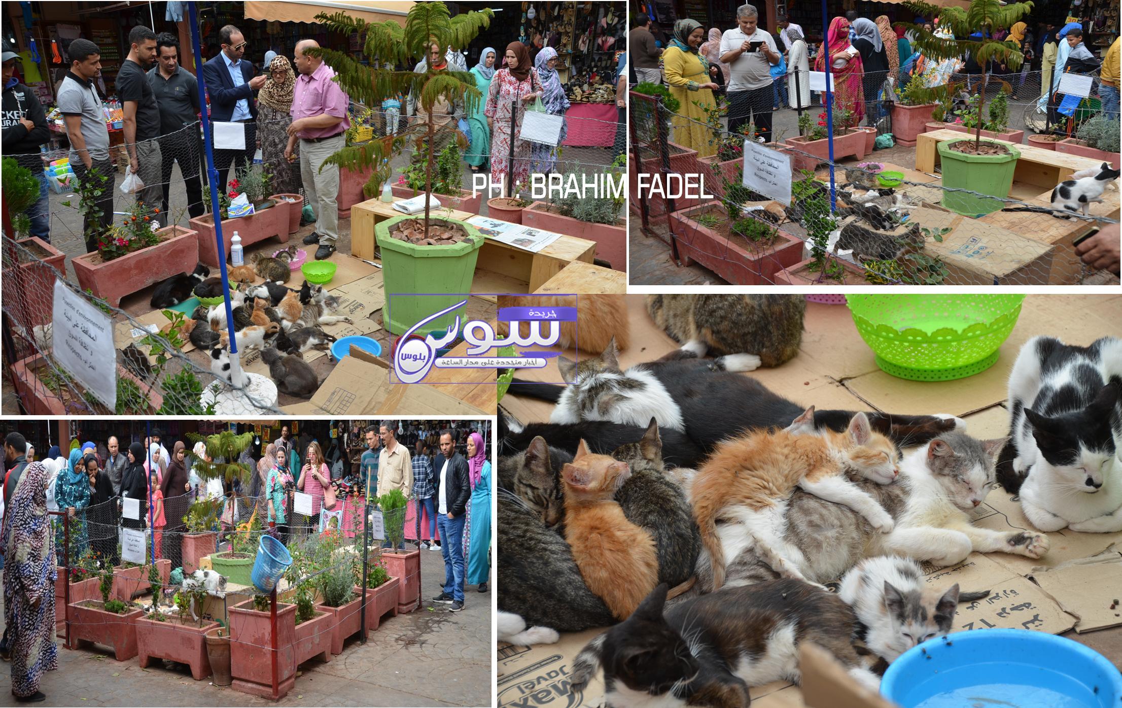 عاجل: بالفيديو …بلدية أكادير تقرر تصفية قطط حديقة سوق الأحد وتمهل راعيها 48 ساعة لإجلائها