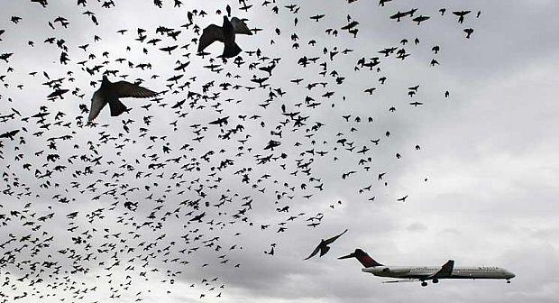 نجاة طائرة قادمة من الحسيمة بأعجوبة بعد اصطدامها بسرب طيور